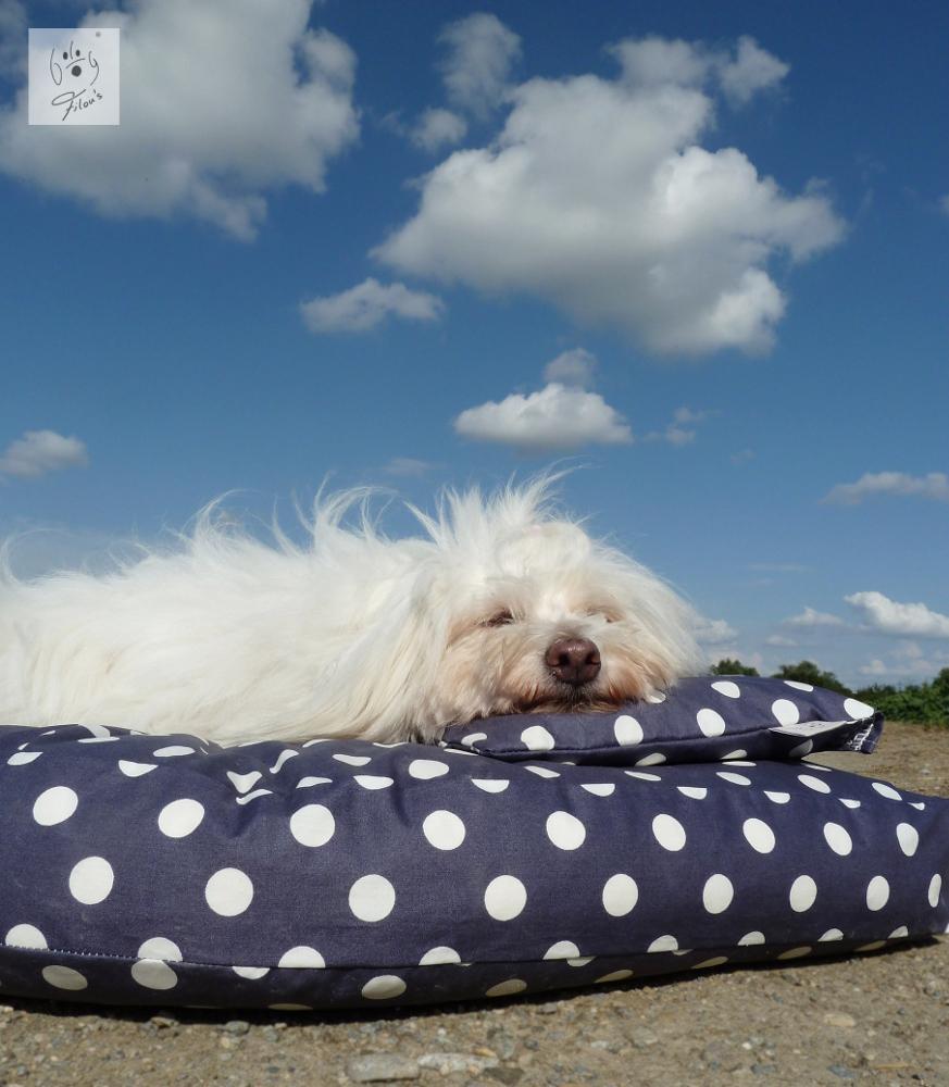 Hund trifft Natur und Design – ökologisches Hundezubehör von Dog Filou's®