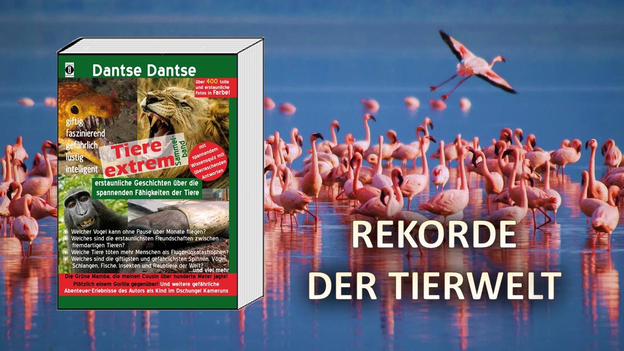 """Spannende Rekorde der Tierwelt - """"Tiere Extrem"""" von Dantse Dantse (Buchvorstellung) - indayi edition"""