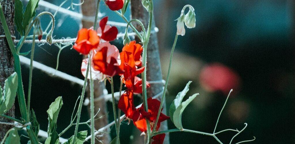 Garten Handbuch möchte jungen Leuten den Garten näher bringen