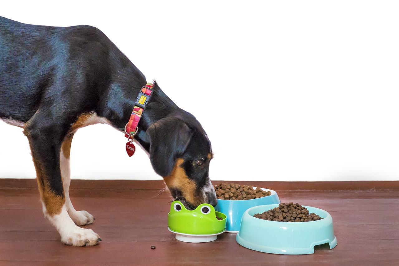 Tipps für das richtige Hundefutter!