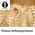 Weizen-Selbstexperiment / Spruch des Tages 30.09.2021